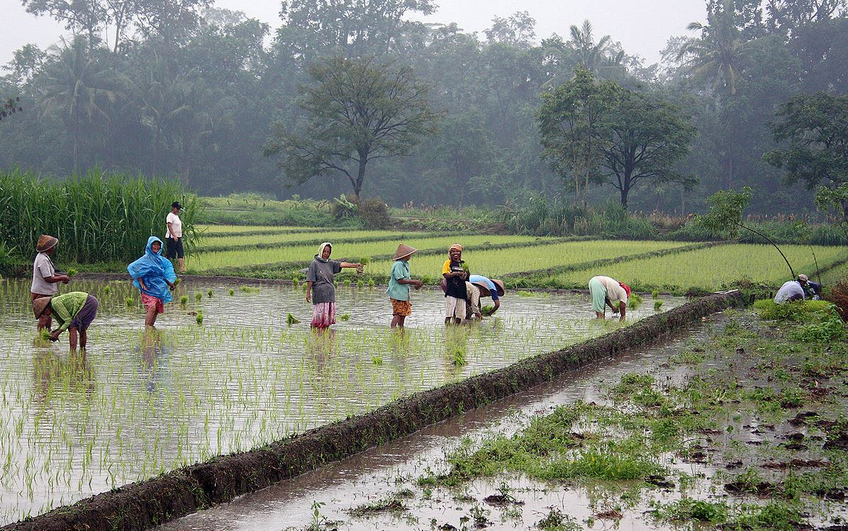 agriculture in indonesia Data, policy advice and research on indonesia including economy, education, employment, environment, health, tax, trade, gdp, unemployment rate, inflation and pisa, agricultural income growth is the main factor behind poverty reduction in developing countries.